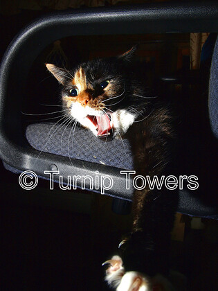 Turnip-Towers-0134 